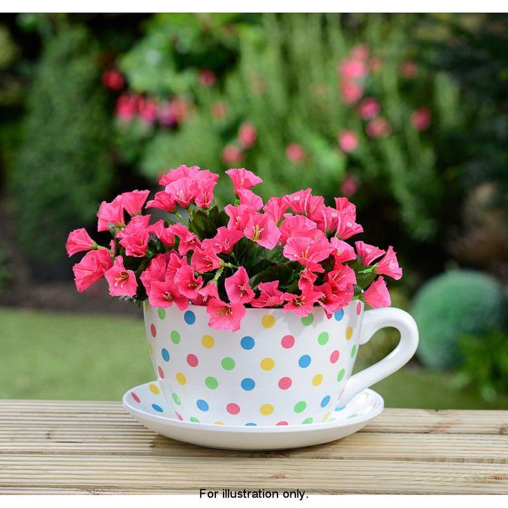 pin by cabinet de curiosities on cup saucer planter pinterest tea cup saucer tea cup and. Black Bedroom Furniture Sets. Home Design Ideas