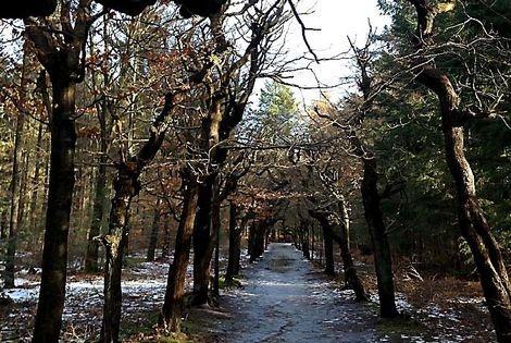 Routetip Baarn: Wandelen in koud parkbos rond Paleis Soestdijk