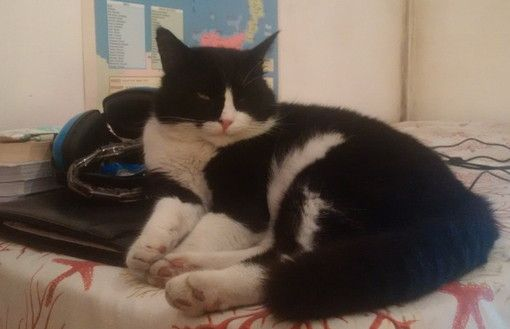 E' stato smarrito da 4 giorni ad Imperia Porto Maurizio, nella zona di Corso Roosevelt e dintorni, il gatto nella foto. Chi lo avesse visto o ne abbia notizie è pregato di telefonare ai seguenti numeri telefonici: 0183/881067 oppure 331/7107319. Il gatto si chiama Trombetta: è un maschio sterilizzato, ha 4 anni, ed ha un carattere docile e mansueto. Condividi Twitter Google+ Pinterest SkypeCondivisioniCommenta tramite Facebook commenti