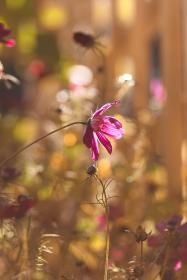 Flowers images - Free stock photos on StockSnap.io