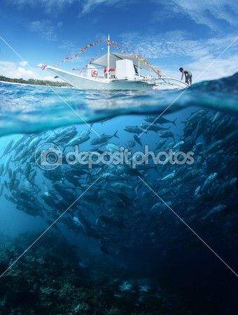 Рыба — Стоковое фото © mihtiander #22540183