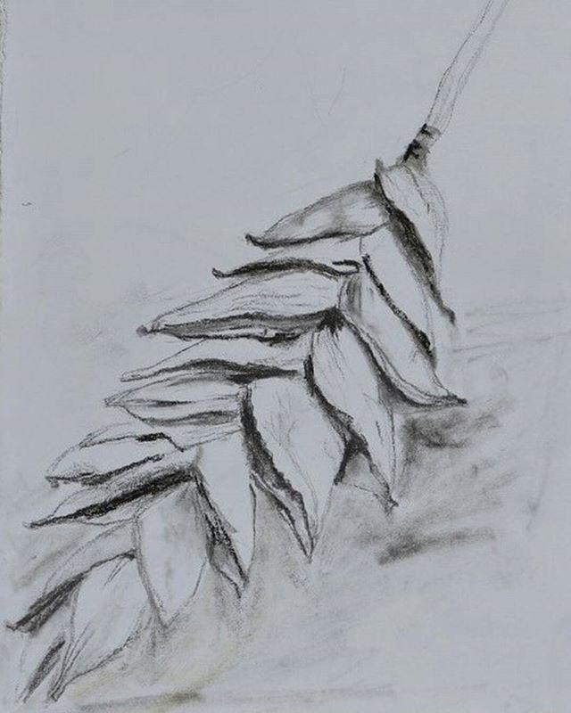 ✖Drawing✖ Drawing Drawing!  I can be drawing the whole day! Flashback #drawing #artdrawing #fineart #artnature #perthcreatives #perthartist #ilovedrawing