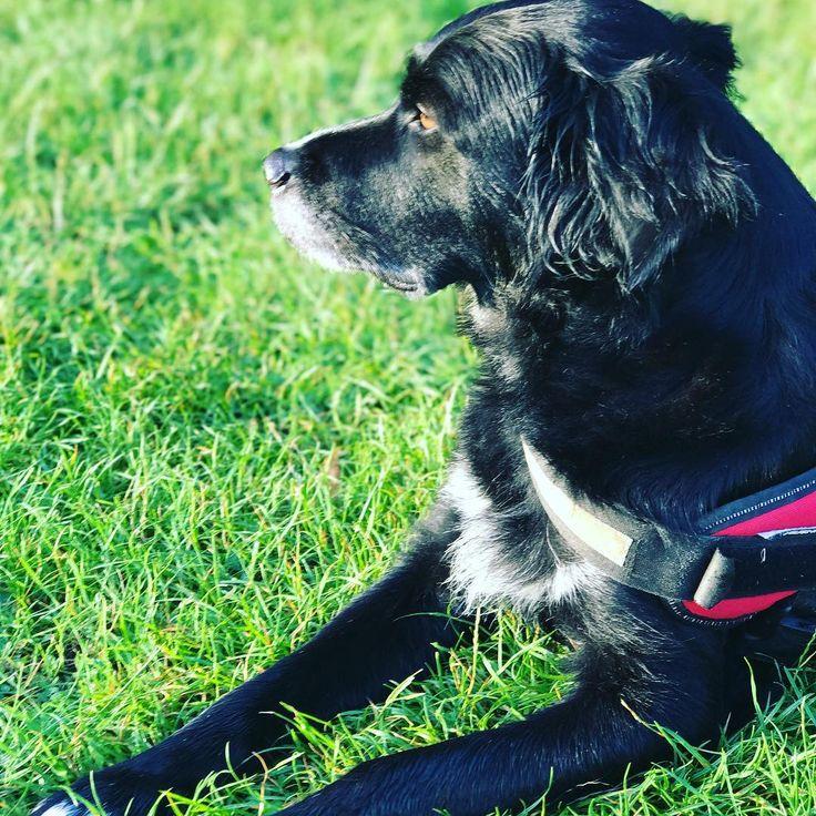 #haku #doglove #doglover #dogwalking #walking #walkingdog #instadog #beautydog #london #peckham #peckhamryepark