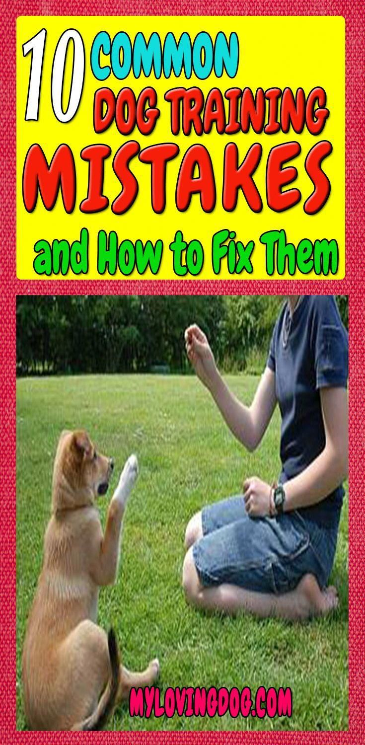 Every Dog Training Program Can Run Into Problems A Lot Of Dog