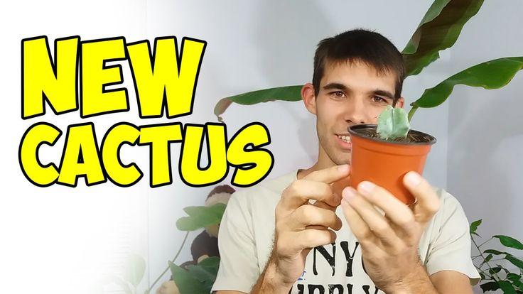 Noul meu Cactus Echinocactus