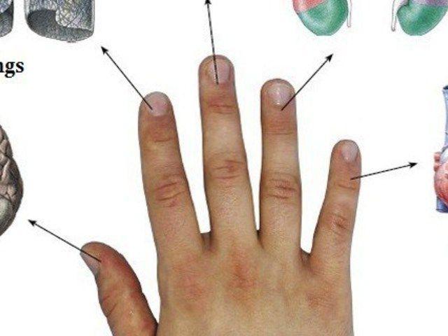 Minden ujjunkhoz két szervünk kapcsolódik. Néz meg, melyiket kell masszírozni a gyógyulás érdekében!
