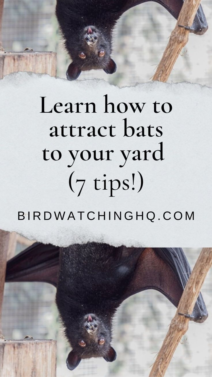 7 Easy Ways To Attract Bats To Your Yard! (2020) Bird