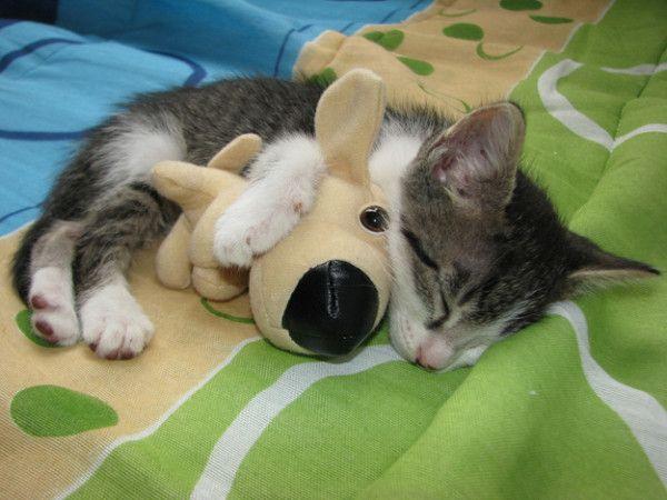 Everyone needs one stuffed animal.