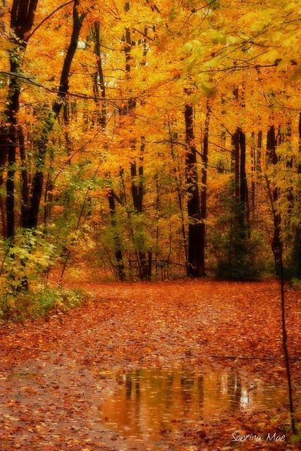 Fall season in Ontario, Canada   Sabrina Mae