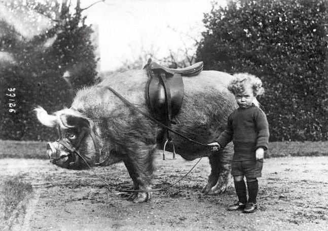 Little pig rider, circa 1930s. (via retronaut.)