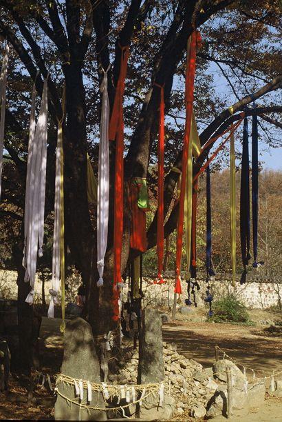 Shaman rag tree, Korea