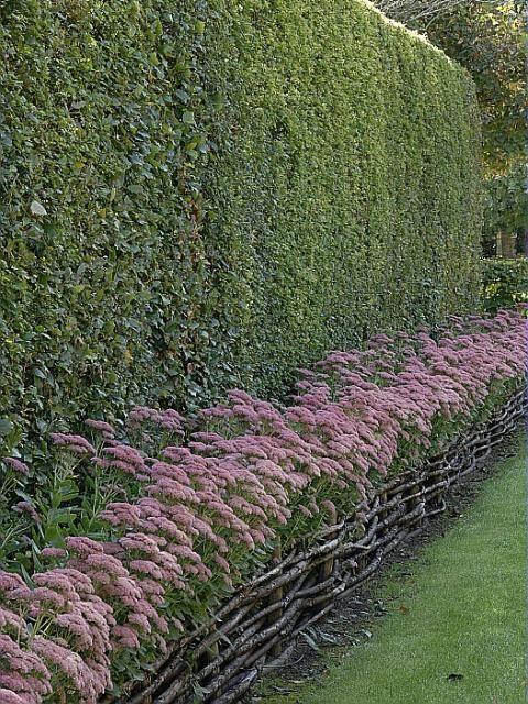 1000 id es sur le th me bordures de pelouse sur pinterest for Plante pour bordure dallee