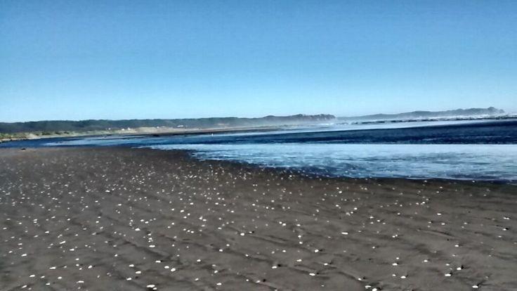 Día 23: Puntos. En realidad son conchitas en la playa de Cucao.