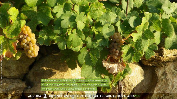 """Dalla vendemmia 2012 la UE consente la denominazione di """"#vino #biologico"""" oltre a quella di vino da #uve biologiche. Un passo avanti verso consumatori e #ambiente.  #Concorso Fotografico. #Immagini e realtà #rurale   #acqua #clima #energia #biodiversità #ecosostenibile #sprecozero #risorsenaturali #creatività #nutrireilpianeta #bellezza #energiaperlavita #paesaggio #natura #tradizione #agricoltura  Ancora 2 giorni e anche tu potrai partecipare al #concorsofotografico #ruralandWED."""