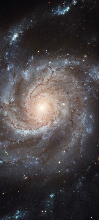 Spiral Galaxy M101 - The Pinwheel Galaxy