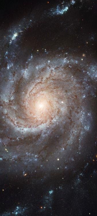 Spiral Galaxy M101 - The Pinwheel Galaxy