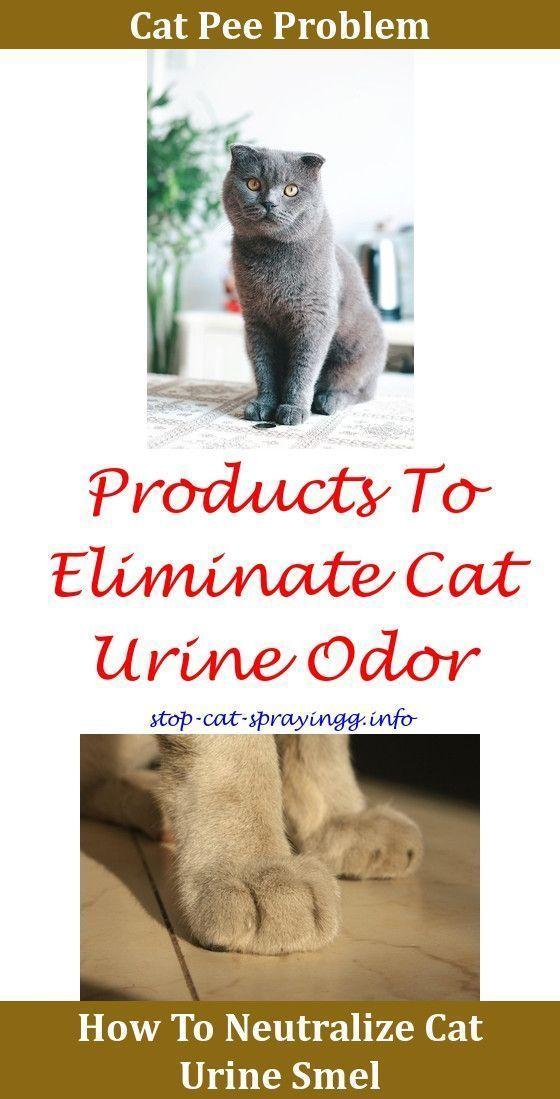 Basic Cat Training Tips Cat Urine Cat Toilet Male Cat