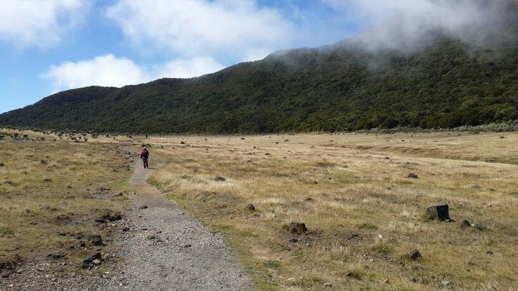 Surya Kencana edelweiss field. Mount Gede, West Java #visitIndonesia