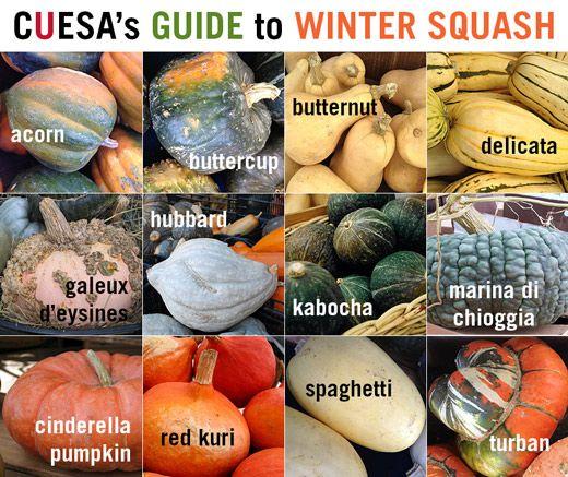 CUESA's Guide to Winter Squash http://www.cuesa.org/article/guide-winter-squash#