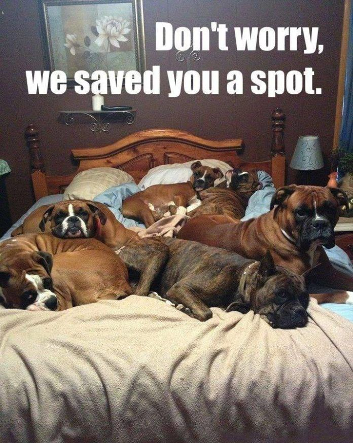 10 Of The Happiest Animal Memes To Start The Week With A Smile Lovely Animals World Best Big Dogs Boxer Dogs Funny Funny Dog Memes