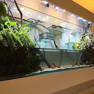 【cotup】さんのInstagramをピンしています。 《Large Terarium Tank 3000x380x450/1200H エーピーエヌ様  #海水魚 #ガラス水槽 #オーダーメイド #オーバーフロー #amp #アクアリウム #水草 #水槽 #インテリア #大型水槽  #水草レイアウト #植物園 #水族館 #コットアップ #水景水槽 #海水魚水槽 #水草水槽 #レイアウト水槽  #熱帯魚 #水景 #テラリウム #ビバリウム #bizarreplants #reeftank #園芸 #ガーデニング #》