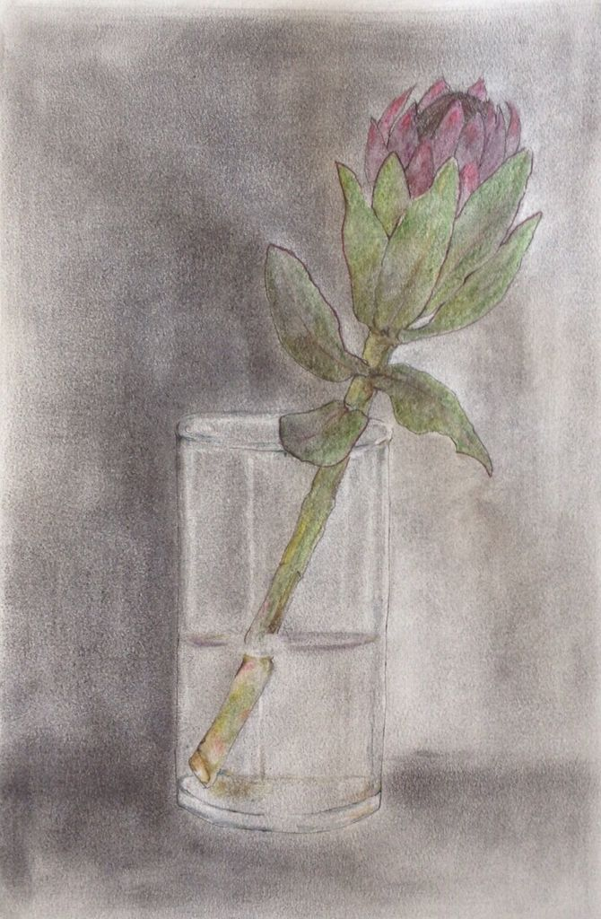 Protea  Graphite, ink and wash A3