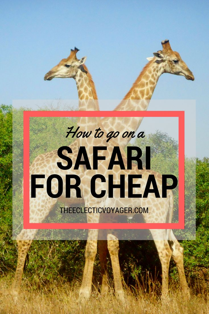 A safari is often categorized as a vacation that only the rich can afford.Let's bust this myth! Here are my tips on how to go on a safari for cheap.