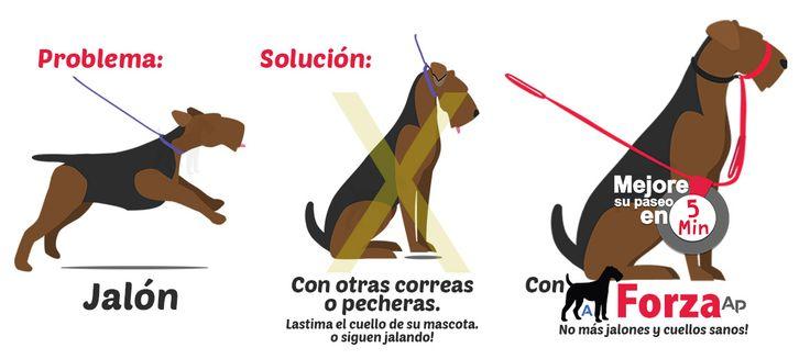 Adiestrador - Collares Forza Ap de adiestramiento canino sin jalones sin dañar cuello