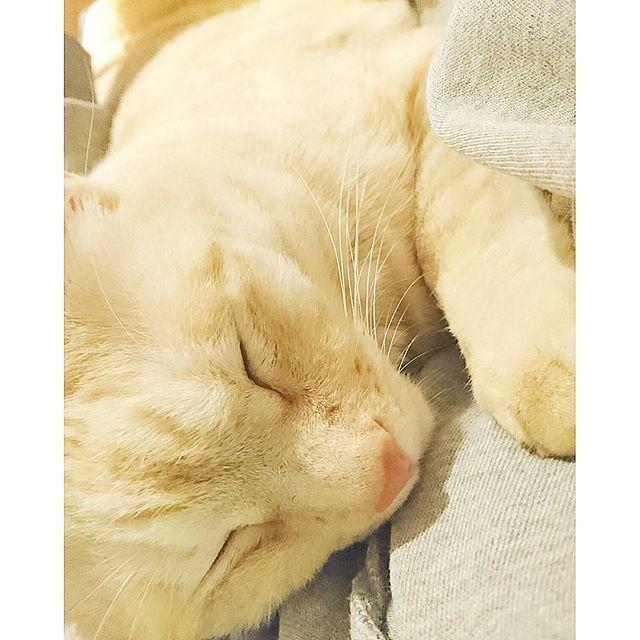 * . ウニ君もコタツの方が温かいだろうに、 ソファーで寝転ぶ私にピッタリ張りついて 腕枕でスヤスヤお昼寝 :)⭐ . 何を思ってババァに張りついてくるんだか… 可愛いくてたまりません(*^3^)♪ . . #猫#cat#野良猫#元野良猫#保護猫 #多頭飼い#愛猫#猫と暮らす#猫のいる暮らし #猫のいる生活#息子猫#ウニ君#uni #甘えん坊#泣き虫#運動神経抜群 #添い寝大好き君#離れると付いてくる