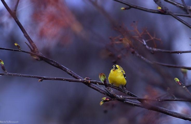 https://flic.kr/p/e5EnvD | Les bourgeons chantent | Les bourgeons chantent / AN-018©  Le printemps nous sourit. Les bourgeons colorés chantent. Au printemps le paysage se transforme. Les bourgeons verts et roses qui éclosent. Le printemps est synonyme de vie et de réveil. La terre dégèle et libère son parfum de feuillage frais.  Le réveil de la nature nous inspire la plus grande sensibilité.  Les oiseaux chantent ''le cycle de la vie''  à l'arrivé du beau temps.  Le printemps exhale un…
