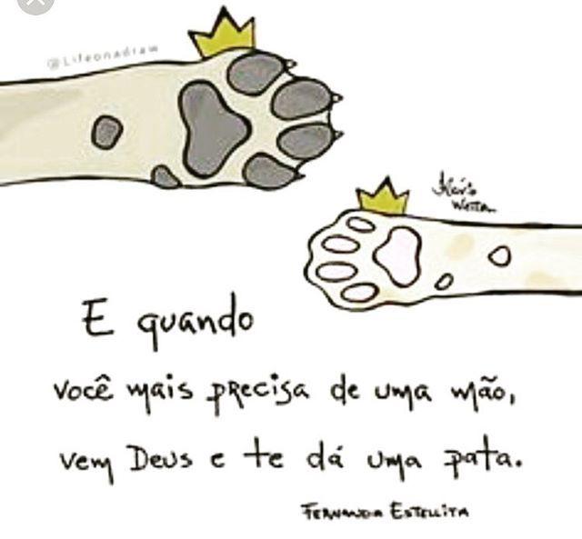 ❤❤❤ #amoanimais  #filhode4patas  #amocachorro  #cachorro  #gato  #cachorroétudodebom  #gatinho  #pata  #petmeupet