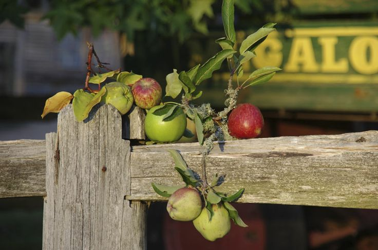 The Apples from an era long gone