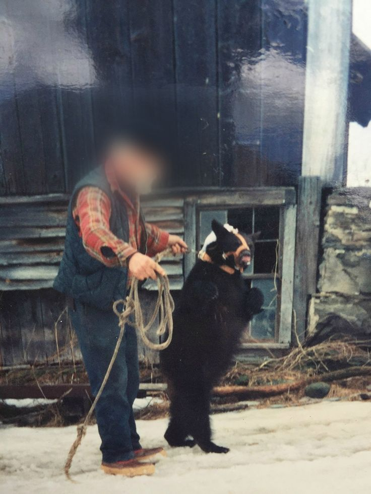 Bear training EDIT BLUR WRONG message this bear is still a tortured slave End Animal Entertainment