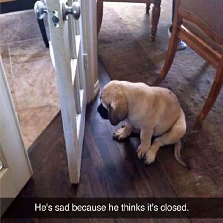 Really funny animal pictures