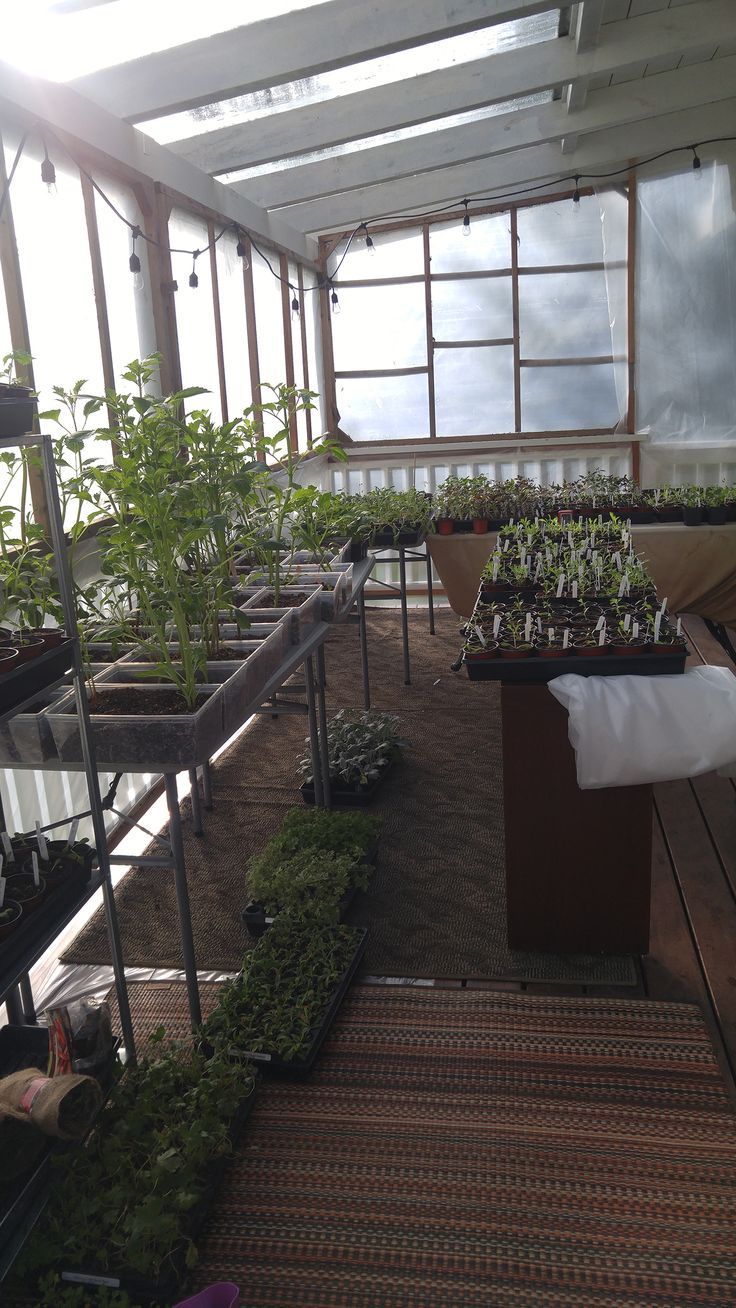 The sundeck magically transforms into a giant greenhouse from late December to April.