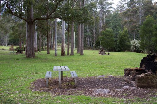 O'Neill's Creek Picnic Ground and Nature Trail Photo by Benita Bell of Daydream Photography, article for think-tasmania.com #Tasmania #Bushwalking