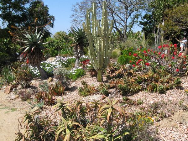 17 Best images about Landscaping for the Desert on