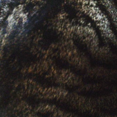 背中 #cat