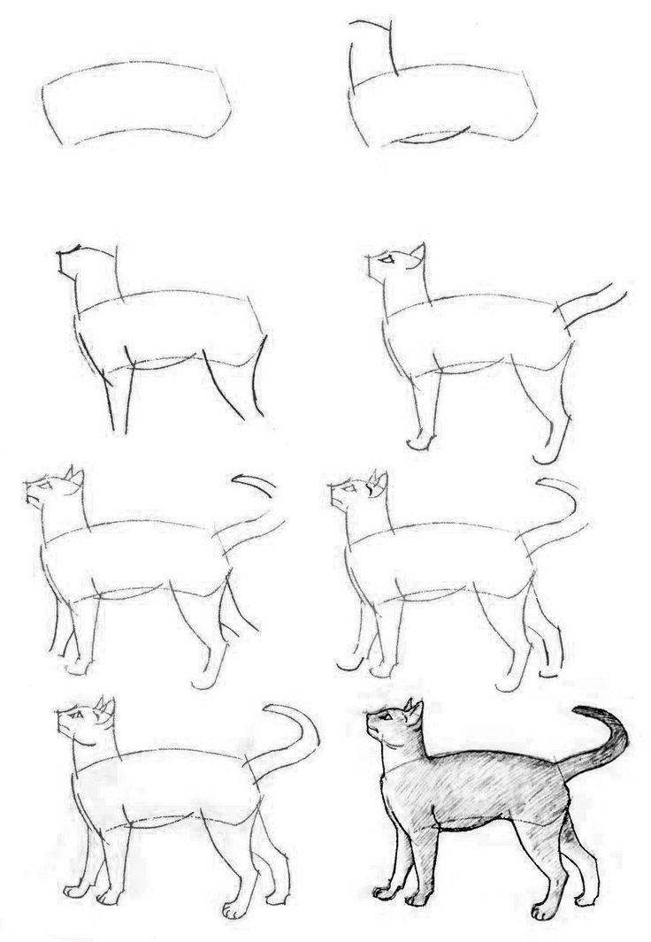 Как рисовать кошек? | Рисуем котенка, голову кошки и мультяшную карандашом поэтапно