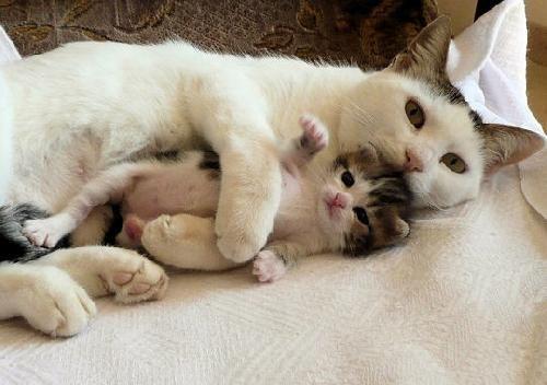 Prendre un chaton dans ses bras