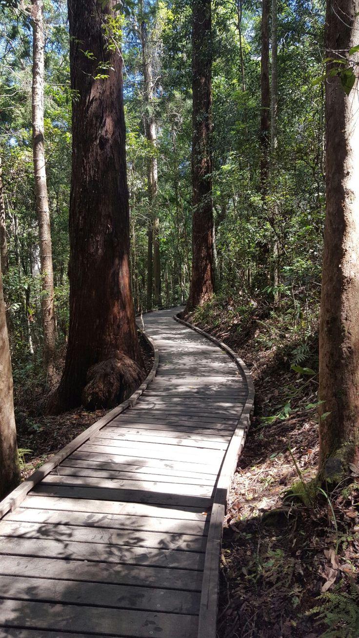 Kondallila Falls National Park. Sunshine Coast hinterland. Montville. Queensland