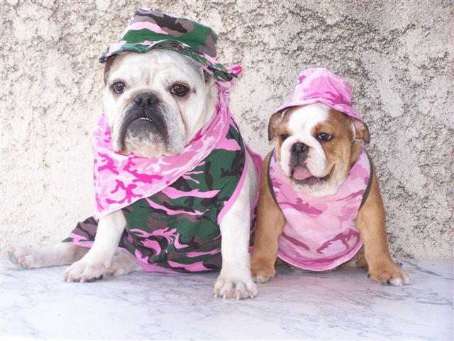 The Baggy Bulldog Collection