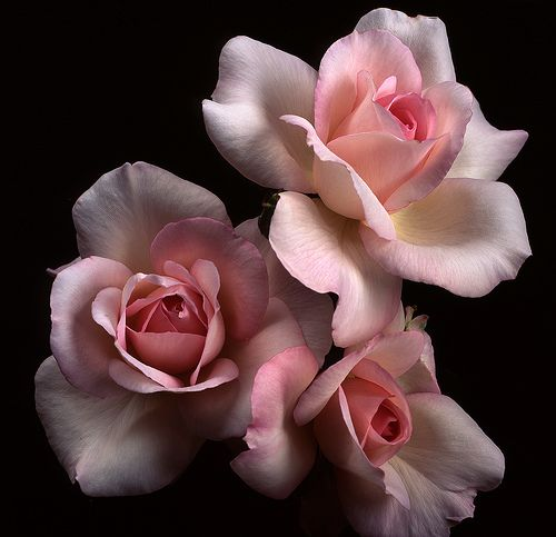 They look like porcelain...but have captured the beauty of the color and delicate petal.