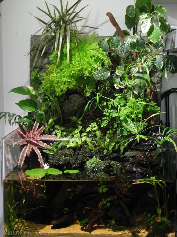 Terrarium, Turtle homes and Vivarium on Pinterest