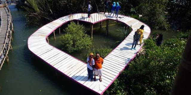 Wisata Romatis Di Hutan Mangrove Kulonprogo