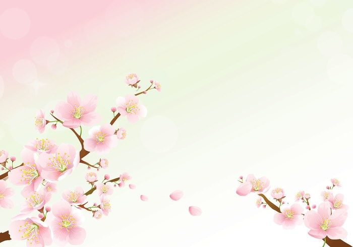 Best 10mn Wallapapers Cherry Blossom Wallpaper Daisy Wallpaper Pink Daisy Wallpaper