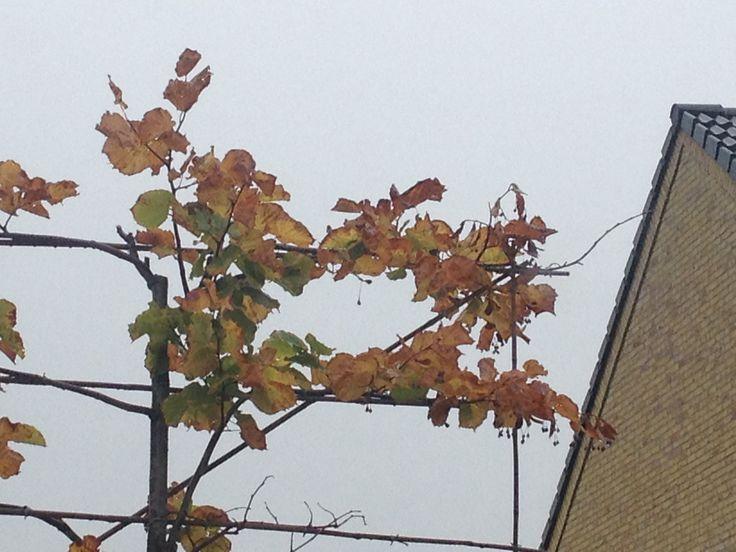 17 best images about printratuin romantiek in de herfst die tweeling proef zijn on - Ideeen van interieurdecoratie ...