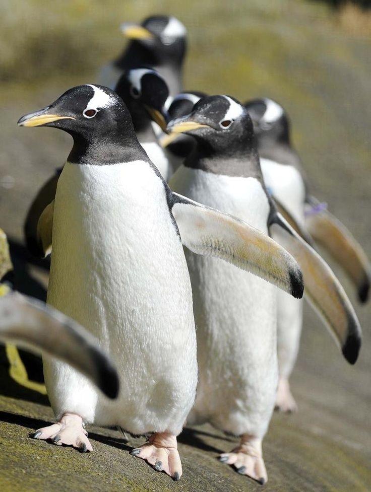вашему страус пингвин картинки фото