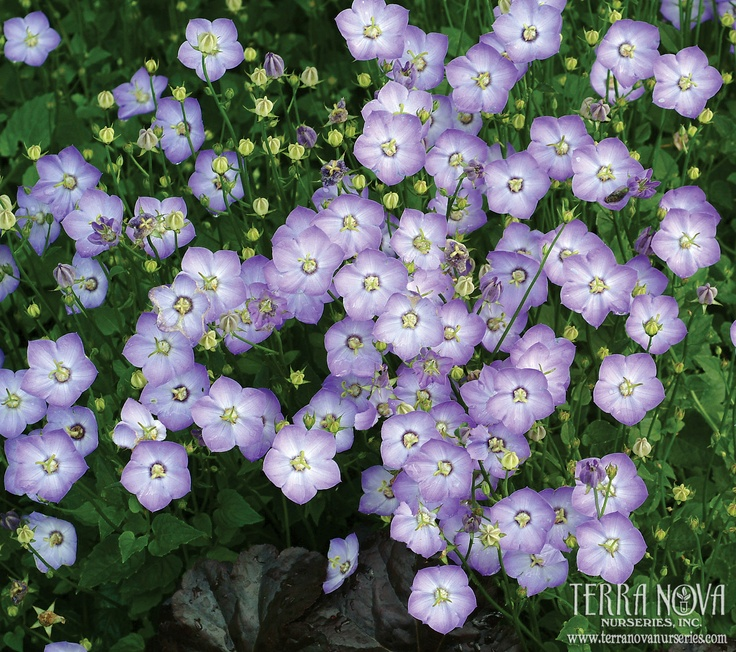 1000 images about partial shade border ideas and for Porch plants that are part sun and part shade