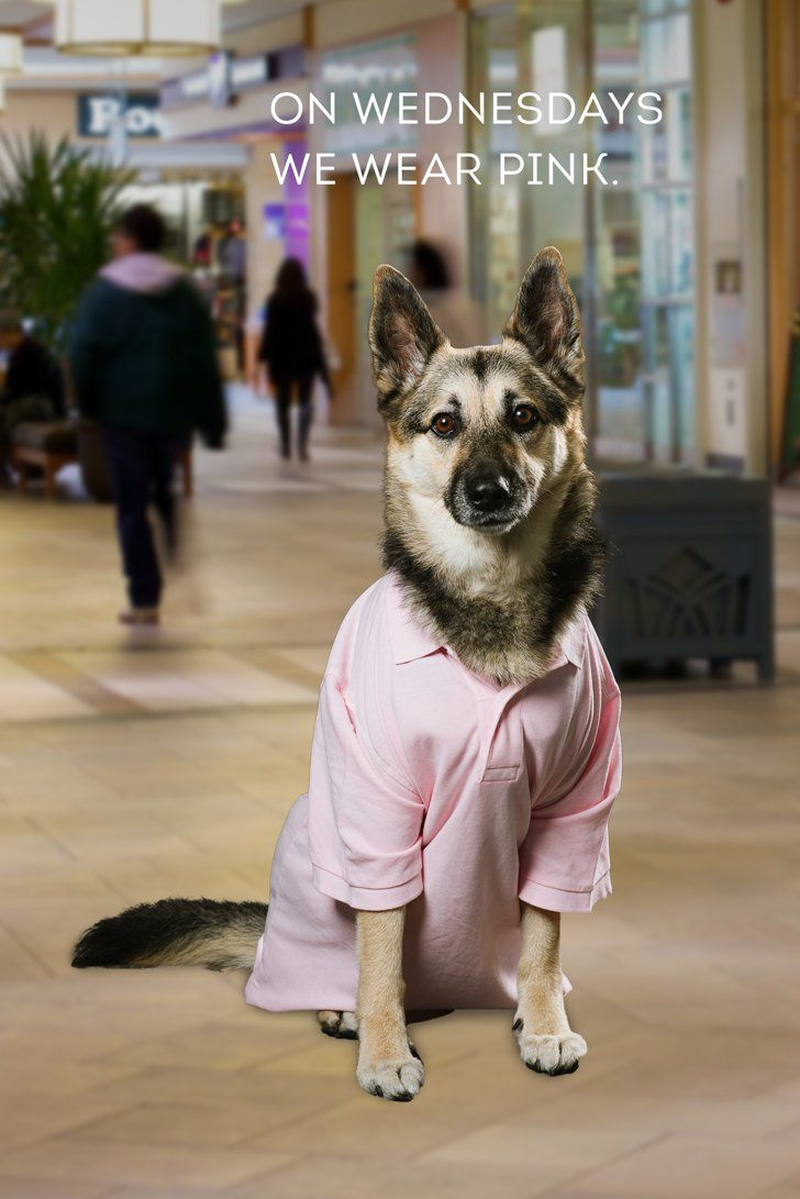 The Only Thing Better Than Classic Mean Girls Is Dogs Dressed as Mean Girls
